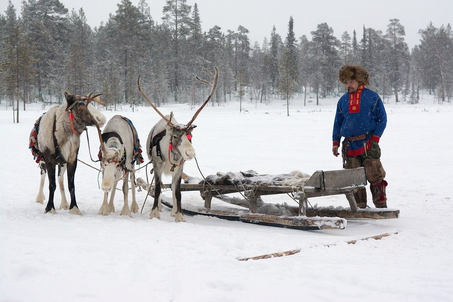 Sami with reindeers