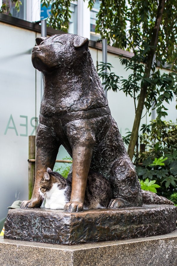 Bronze statue of the dog Hachiko in Tokyo a symbol of loyalty