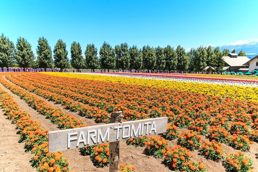Tomita Farm, Furano, Hokkaido, Japan